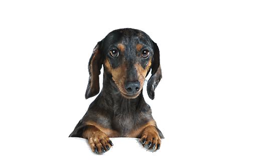 Pet Supplies on Sale: Discount Pet Products   PetSmart