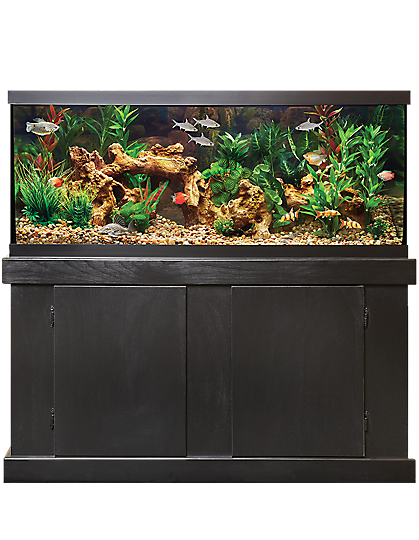 Large fish tank on stand