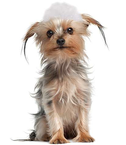 Dog Grooming Mooresville Nc