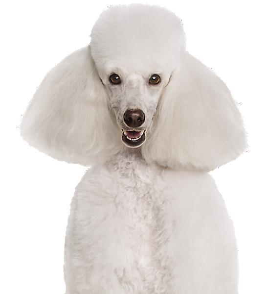 Petsmart Dog Training Book