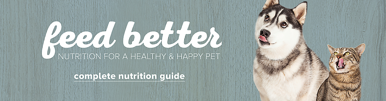 Feed your best friend better Complete nutrition guide