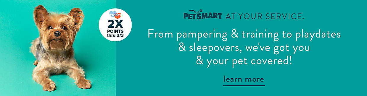 At Your Service. From pampering & training to playdates & sleepovers, we've got you & your pet covered! Learn more