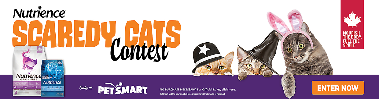 Enter Nutrience Scaredy Cats Contest for a chance to win a prize worth up to $500. Enter now