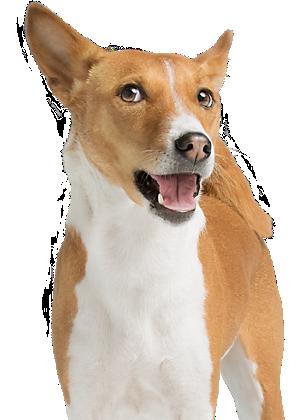 Pet Rewards: PetSmart Treats Loyalty Program | PetSmart