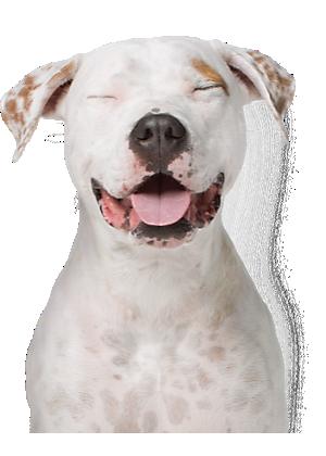 Pet Rewards: PetSmart Treats Loyalty Program   PetSmart