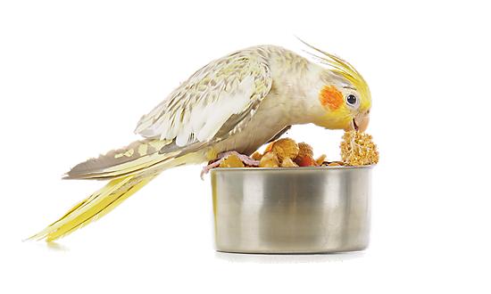 Bird Waterers Amp Bird Cage Feeders Petsmart