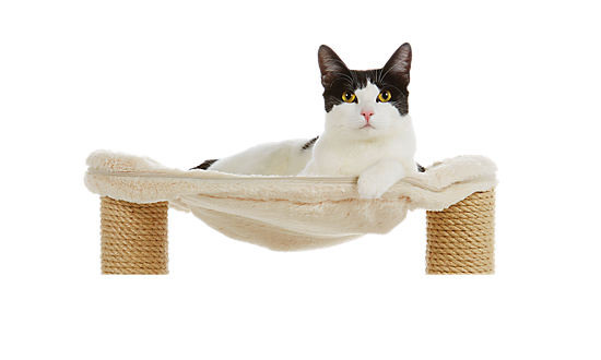 Cat Scratcher Tree Pet Play Toy Mouse Furniture Scratching Post Climbing Frame Cat Furniture Pet