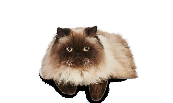 Cat Food On Sale At Petsmart