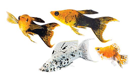 Aquariums & Stands