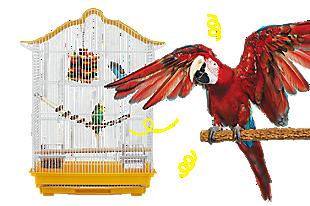 Pet Birds for Sale: Finches, Parakeets, Conures & More | PetSmart