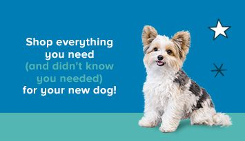 Shop everything you need, and didn't know you needed, for your new dog!