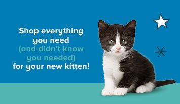 Shop everything you need, and didn't know you needed, for your new kitten!