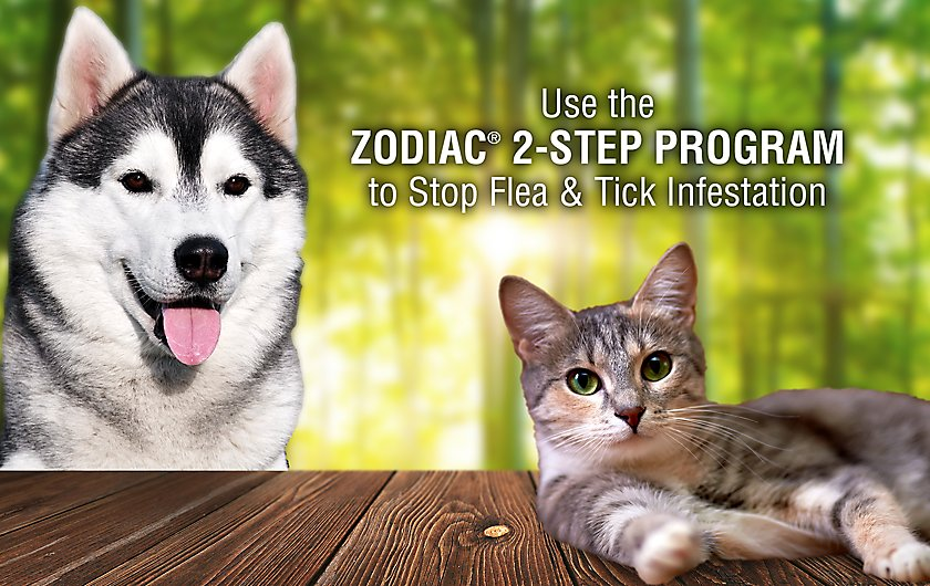Stop Flea & Tick Infestations