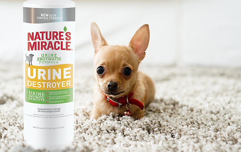 Can Nature S Miracle Be Used On Dogs