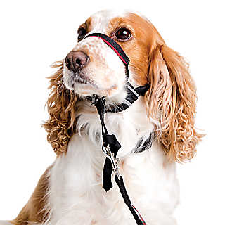 New at PetSmart.com! Halti® training collars & leads