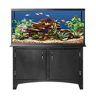 Pet fish for sale tropical and freshwater fish petsmart for Petsmart fish tanks for sale