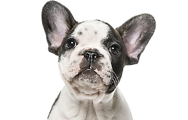 Dog Placemats: Dog Food Bowl Mats | PetSmart