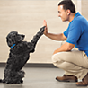 Do Puppy Classes Teach Your Dog To Heel