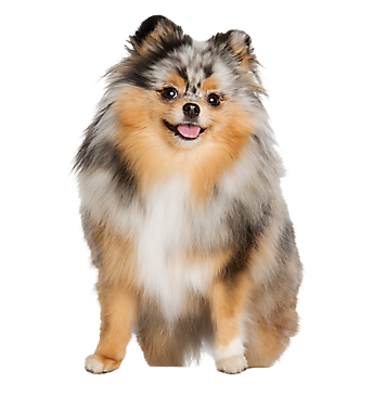pomeranian groomer near me dog cat grooming services petsmart 2577