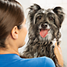 Dog Amp Cat Grooming Services Petsmart