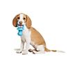 Petsmart Dog Training Vaccination Requirements