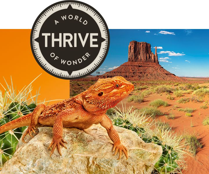 Thrive Brandshop