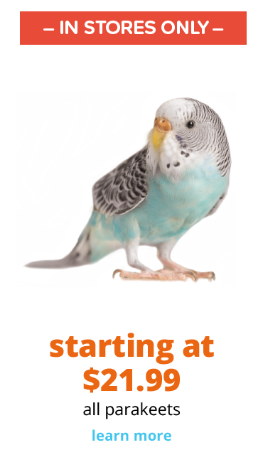 starting at $21.99 all parakeets