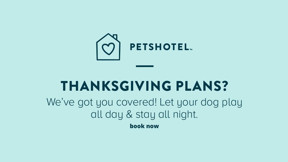 PETSHOTEL THANKSGIVING PLANS? We've got you covered! Let your dog play all day & stay all night.                          book now >