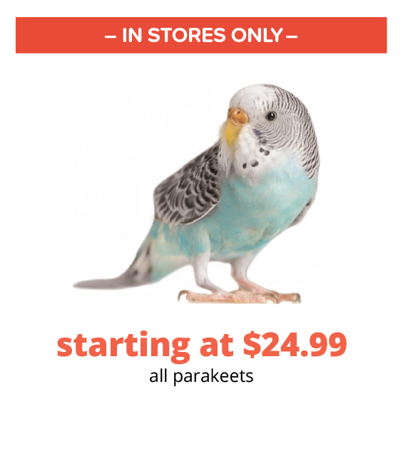 starting at $24.99 all parakeets