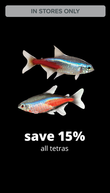 save 15% all tetras.
