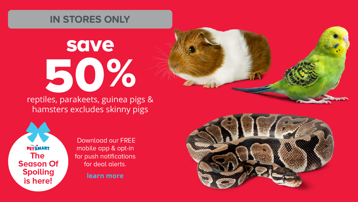 save 50% reptiles, parakeets, guinea pigs & hamsters excludes skinny pigs