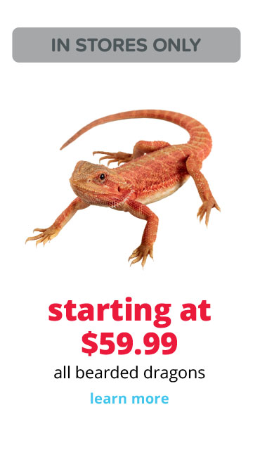 starting at $59.99 all bearded dragons