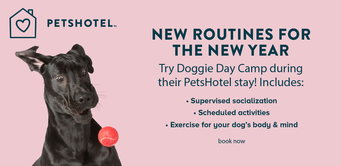 NEW ROUTINES FOR THE NEW YEAR                                             Try Doggie Day Camp during their PetsHotel stay! Includes:                                          • Supervised socialization                                         • Scheduled activities                                          • Exercise for your dog's body & mind                                         book now