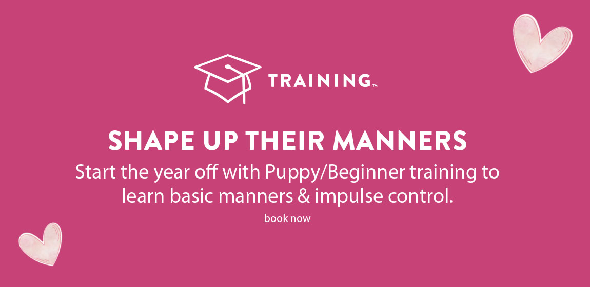 SHAPE UP THEIR MANNERS	Start the year off with Puppy/Beginner training to learn basic manners & impulse control.