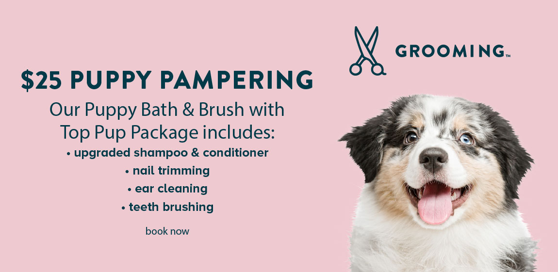 $25 PUPPY PAMPERING Our Puppy Bath & Brush with Top Pup Package includes:                                              • upgraded shampoo & conditioner                                             • Nail trimming                                             • Ear cleaning AND                                             • Teeth brushing                                             book now