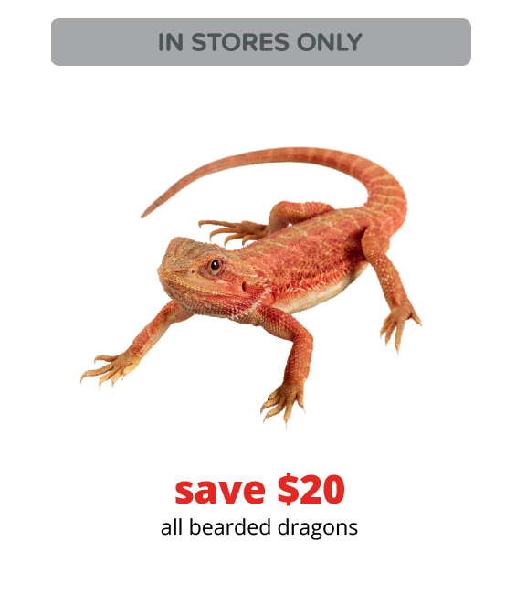 save $20	all bearded dragons