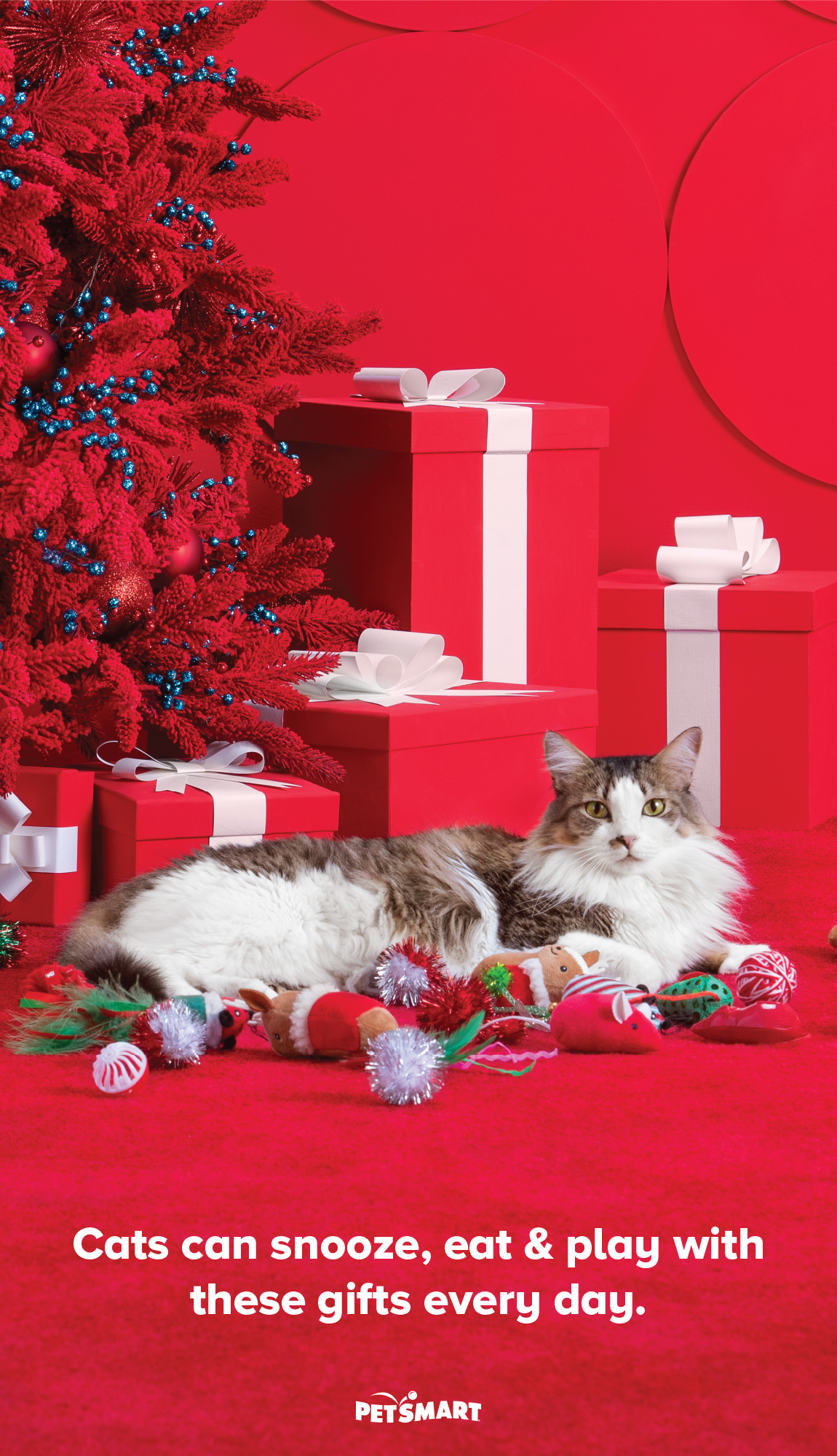 Cats can snooze, eat & play with these gifts every day.