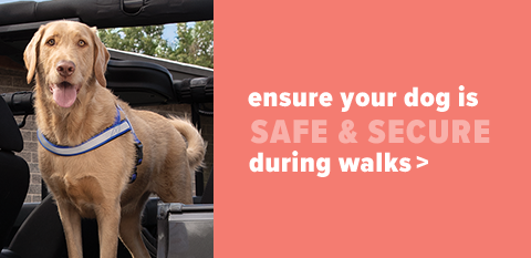 Puppy Collars, Harnesses & Leashes. Ensure puppy is safe when out & about.