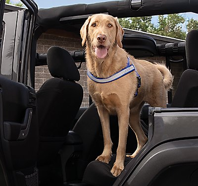 Tips for Safe Travels with Your Dog