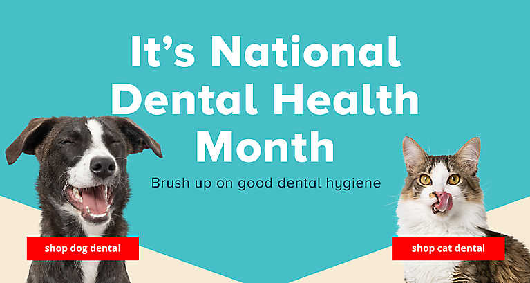 It's National Dental Health Month! Brush up on good dental hygiene >