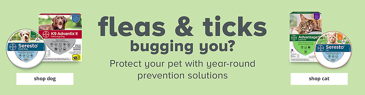Fleas & ticks bugging you? Protect your pet with year-round prevention solutions