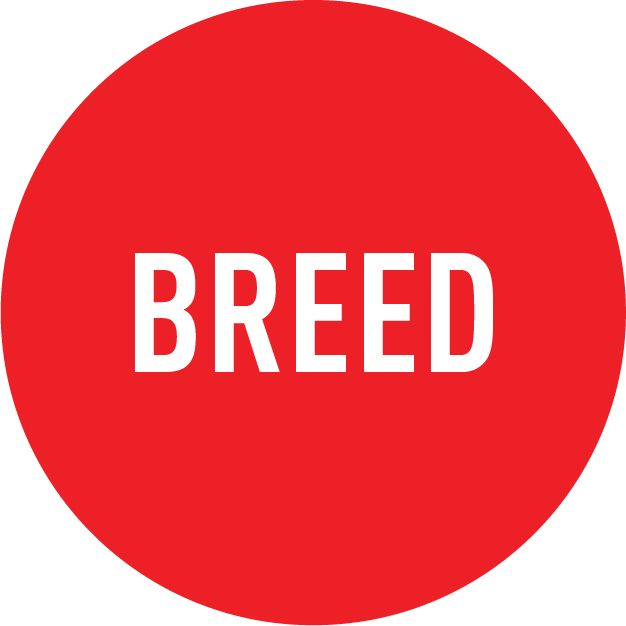 Feed Your Breed
