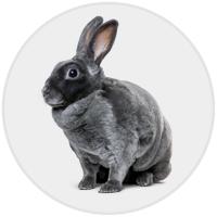Rabbit (Photo)