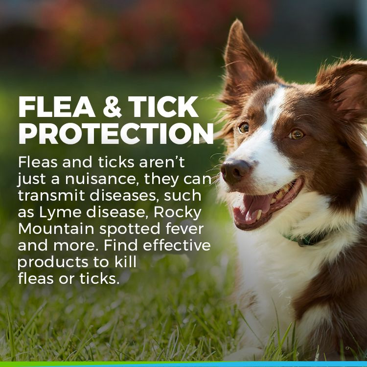 dog flea tick