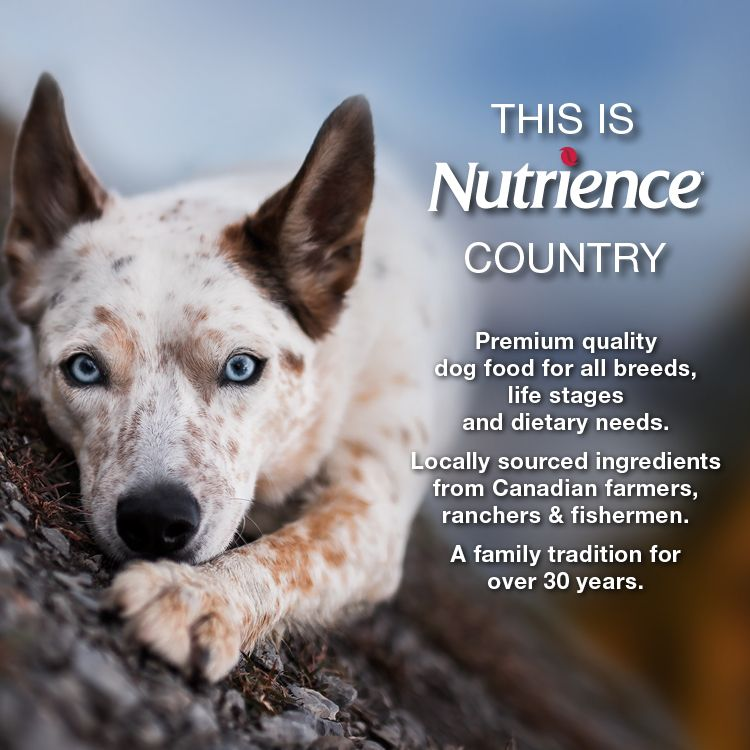 This is Nutrience Country