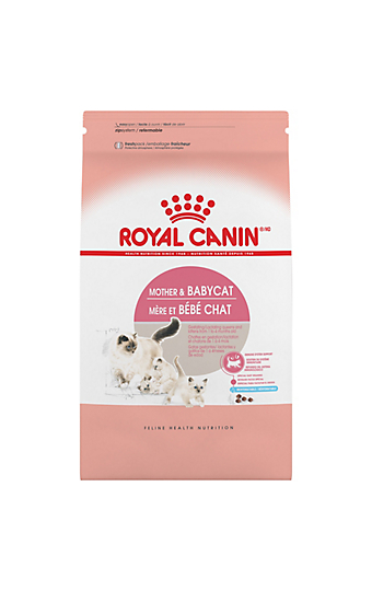 Kitten Food Feeding For Growth Amp Development Royal Canin