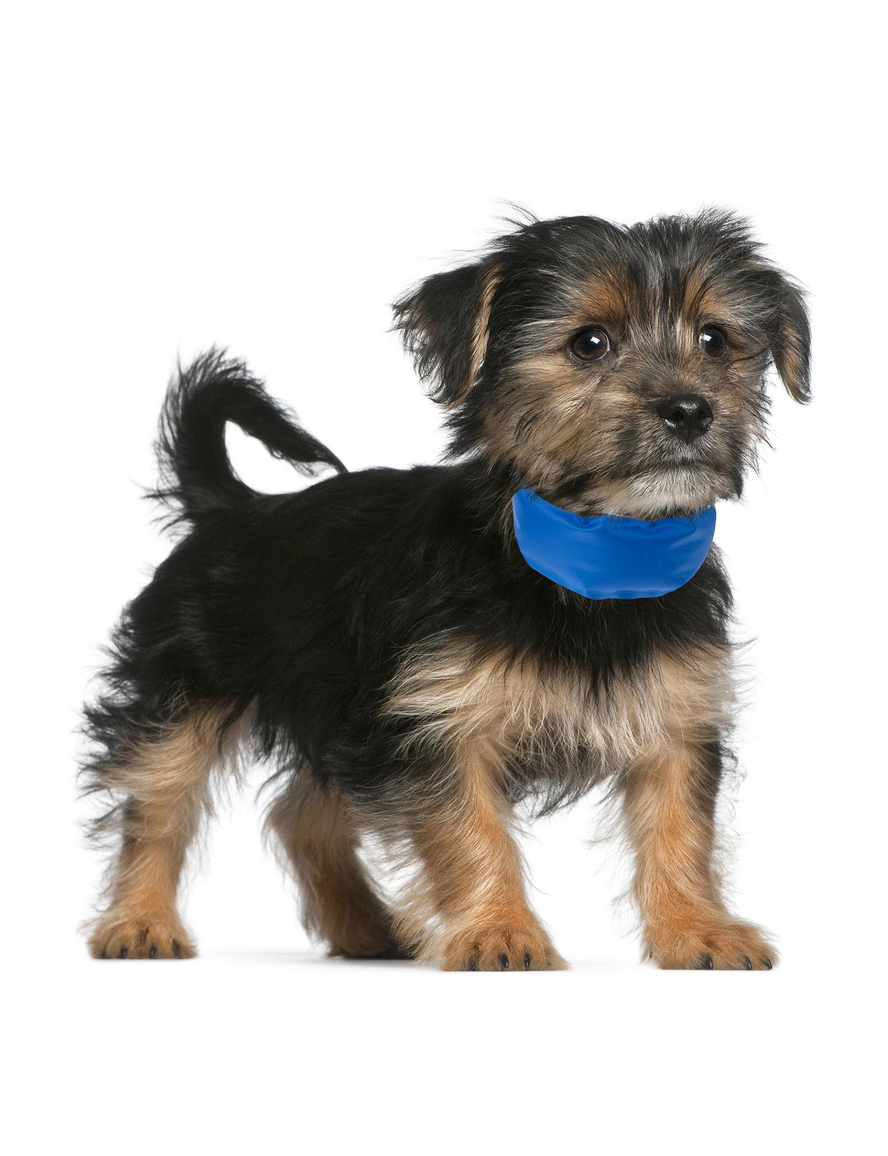 Petmaker Blue