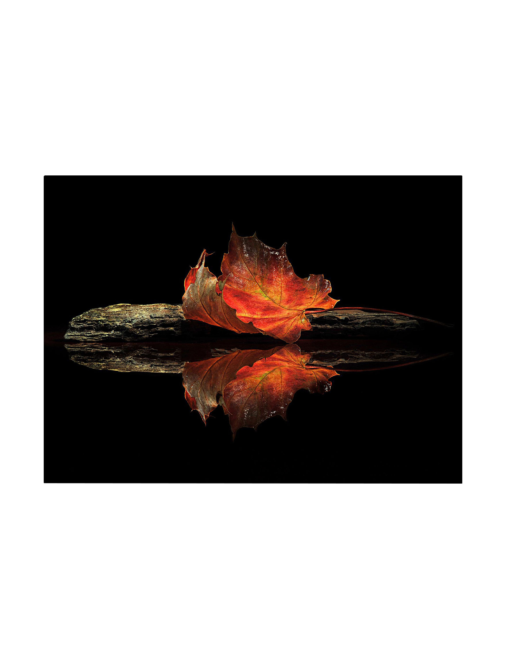 Trademark Fine Art Black / Red Wall Art Home Accents Wall Decor