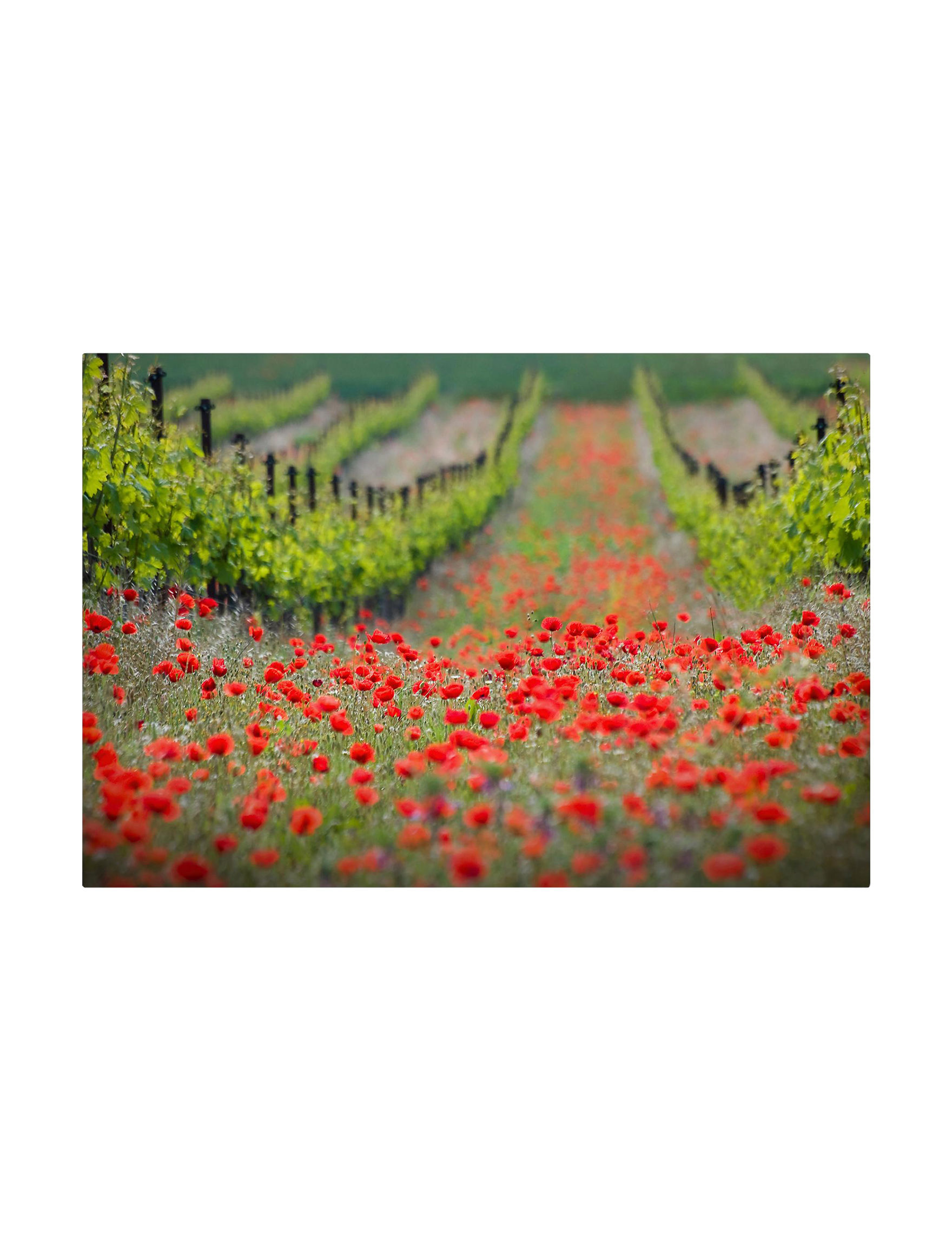 Trademark Fine Art Green / Red Wall Art Home Accents Wall Decor