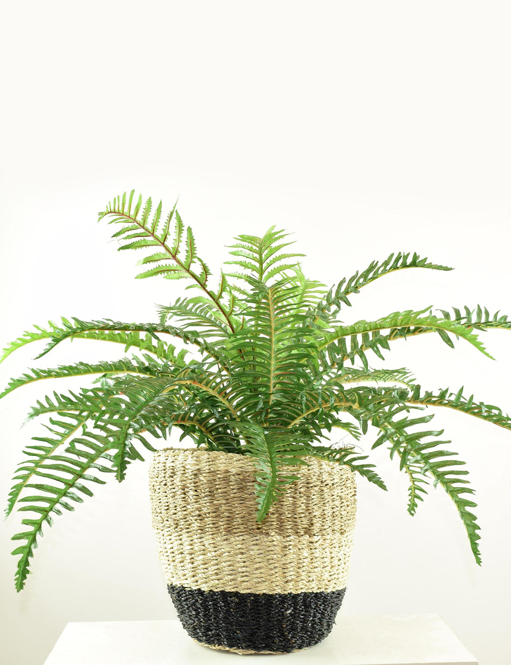Tan Faux Plants Home Accents